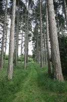 Woods1 by NickiStock