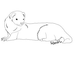Free Ferret Lineart by TheDashcat