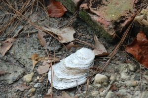 Oyster Shell dans Naturel by crystal-koi-fish