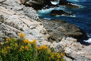 Goldenrod and Rocks by NycterisA