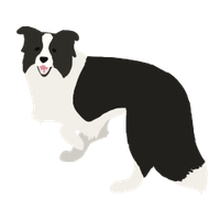 Border Collie by favorcheetah18