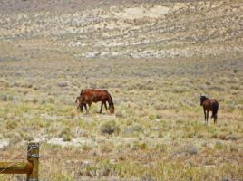 Wild Horses of Nevada II by Synaptica