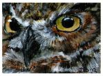Owl eyes by DaisyreeB