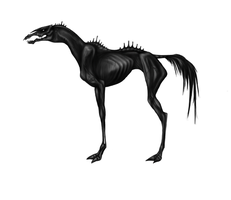 Equus Ferus by BLACKdoggy