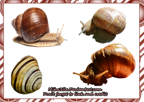 snail stock by Miha3lla