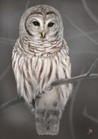 SpeedOwl by JuneJenssen