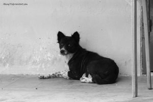Stray Dog by Aheng711