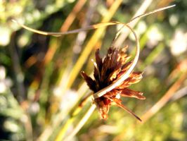 Unknown grass seed head abstract. by jellybush