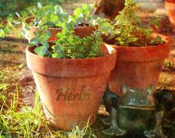 Herbs green and growing by Sherjaxon
