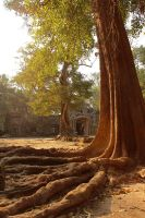 trees of ta prohm: light, roots, and ruin by gypsyskyphotography
