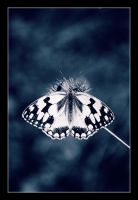 Madame Butterfly by Replicante