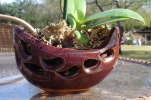 Orchid Pot close up by Stormphyre