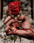 A rose for you... my bleeding Love... by TorquesAngel
