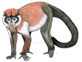 Chilecebus carrascoensis by PaleoAeolos