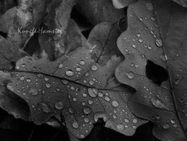 Where the raindrops falling by KungfuHamster