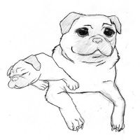 pug drawing by JillyFoo