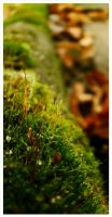 Small World-Autumn by narare