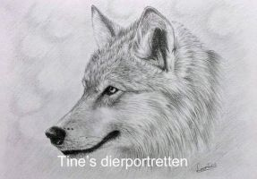 Wolf in graphite by Horsenart95