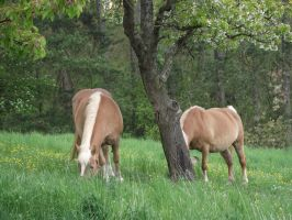 Horses on pasture-serial 1 by sonafoitova