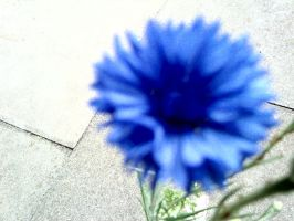 Photography blue flower close by Bexiieeee