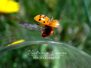 Lady Bug Fly Away Home 2! by vicky271