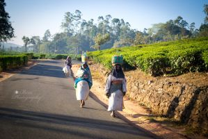 Tea plant workers by arulbeni