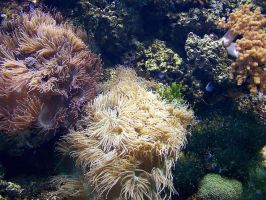 Coral Reef 2 by Malakhite