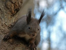 Squirrel 6 by Cundrie-la-Surziere