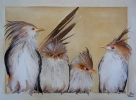 Guira cuckoos by WendyMitchell