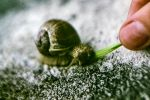 Feeding snails I by simsunas