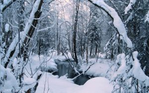 WINTER'S DEEP SECLUSION by 1arcticfox