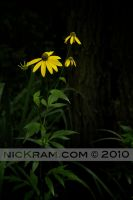 the yellow four by nicKram