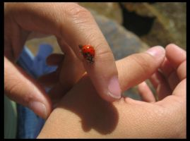 Lady bug of the rocks by pilotZ3ro