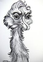 Supercilious Ostrich by HouseofChabrier