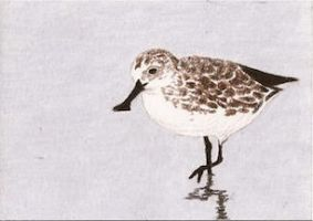 Day 19: Spoon-billed Sandpiper ACEO by whitetippedwaves