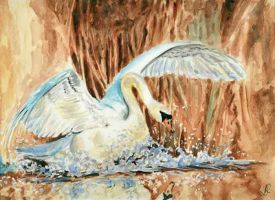 Swan by danuta50