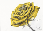 Yellow Rose - Sketch by artfreaksue
