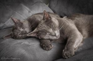 Sleeping Beauties.... by DeoIron