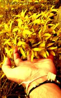 When all gold is fools gold by ranbassi