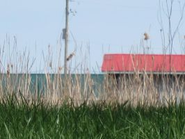 The Red Roofed Barn Beyond the Cattails by AnonAmanda