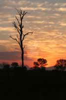 African Sunset by dragonx683