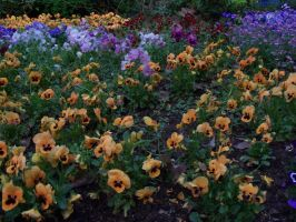 Flower bed by Mecarion