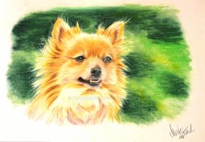 A Pomeranian female Lilly by YunakiDraw