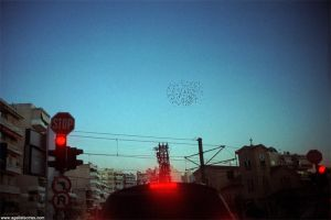 Red Stop Starlings by mrtso