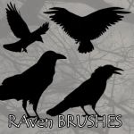 Raven PS BRUSHES by petermarge