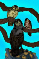 La Brea Owls by avancna