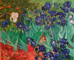 Irises by bornsoulless
