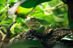 Frog by Talis2000