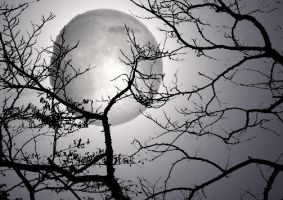 Moonlight through Dead Trees by blackwidowmiko