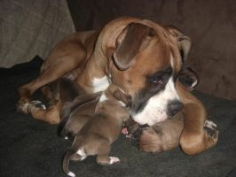 My Dog Aura with Babys by Agamemmnon